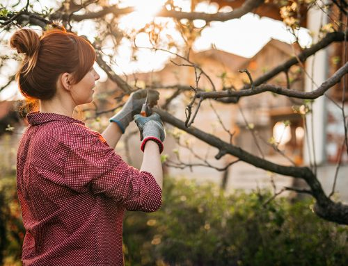 Spring Landscaping Advice from the Experts